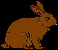 rabbit-297212_1280.png