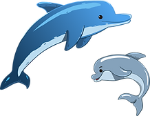 dolphin-3321762_1280.png