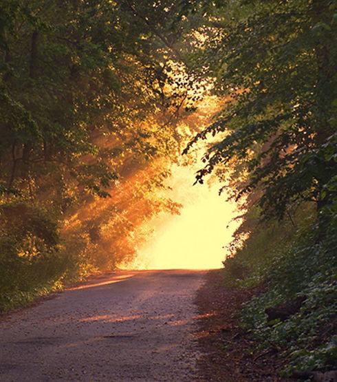 Light on the trail.jpg