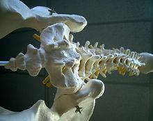Dem_bones_(3387445).jpg