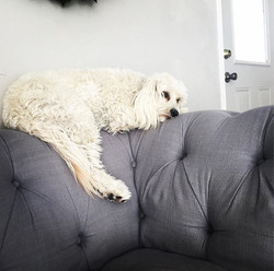 _This spot right here looks comfy_ #sheldy #chillin #relaxing #petresort  #doggydaycare #couchpotato