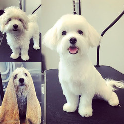 Getting pretty never felt sooo good! #beforeandafter #grooming #nothinglike a good #spaday for you p