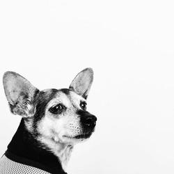 Maggie-Mae is a superstar! Impromptu lobby photoshoot #groomingdoneright #pupsofinstagram #doggie #d