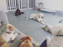 Happy Saturday! It's a beautiful day for doggie daycare