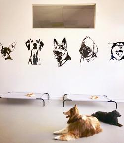 Doggie Daycare