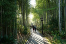 竹林の小道11.jpg