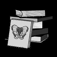 anatomy-shaded-pelvis.png