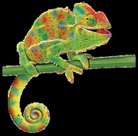 chameleon transparent new-01.png