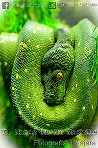 Fotografía de una boa verde en el zoo de belgrado en serbia