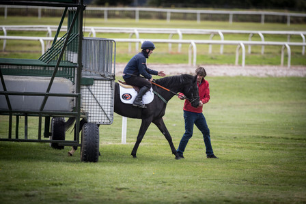 2-year-olds visiting the Curragh training grounds