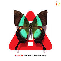 CRITICAL BUTTERFLY SPECIES