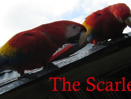 True Stories: The Scarlet Sages