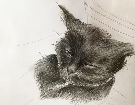 Katze_Katharina_Krojer.jpg