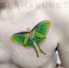 luna moth tattoo, dermapunct.jpg