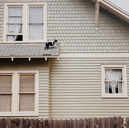 Cat on a Regular Roof.jpg