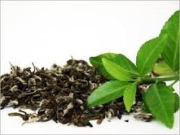 Is Green Tea healthy?Does it really helps in weight loss?