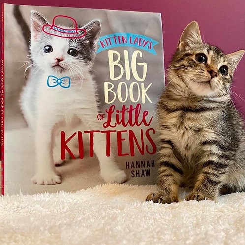 Kitten Lady's Big Book of Little Kittens