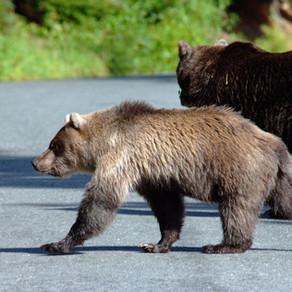 Betekent samenwerken met een Virtueel Assistent, beren op de weg zien?