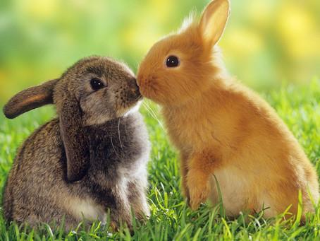 Convivenza felice tra conigli o porcellini d'India!
