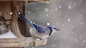 Semi e mangiatoie: come aiutare gli uccelli da giardino in inverno.