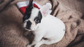 Arriva un cucciolo: come gestire i suoi primi giorni!