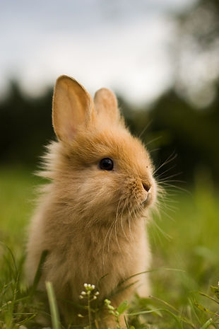 rabbit-bunny-mammal-cute-ear-animal-rode