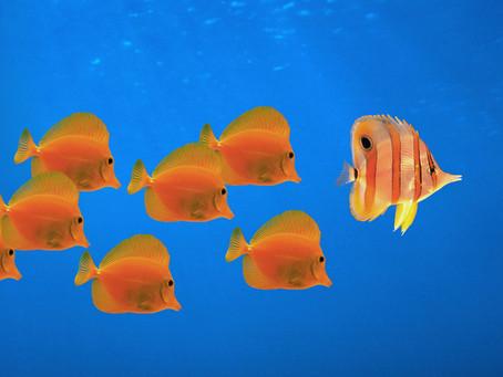 La scelta dei pesci ed il loro ambiente