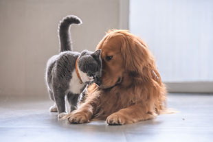 cat-vs-dog-international-cat-day.jpg