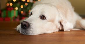 Botti di Capodanno: come proteggere i tuoi animali!