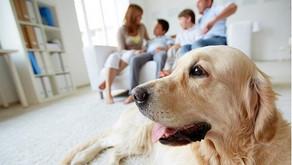 Animali e coronavirus: la pet therapy ci può aiutare durante l'isolamento