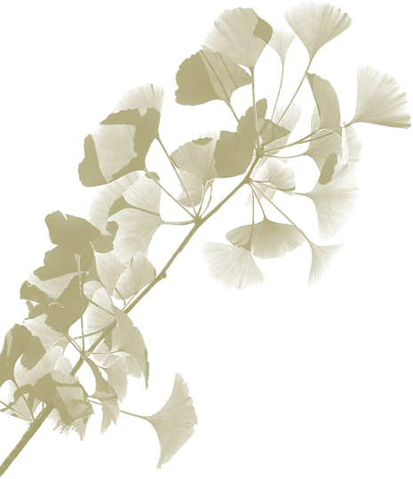 oss inet  background ginkgo.png