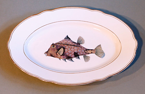 Kofferfisch