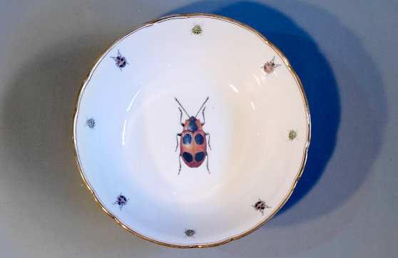 Schüssel  Käfer 2
