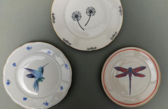 Kolibri, Pusteblume, Libelle