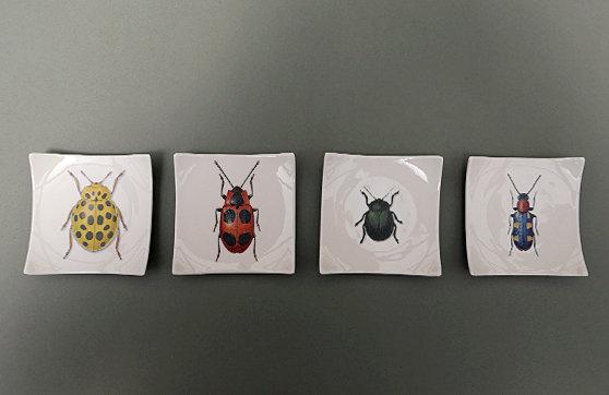 Käfer1 - Käfer 4