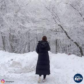 เจจู 1100 จุดชมวิวท่ามกลางหิมะ (Jeju 1100 Altitude Wetland)