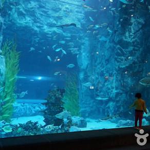 ลอตเต้เวิลด์ อควาเรียม (Lotte World Aquarium (롯데월드 아쿠아리움))