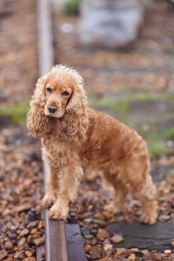 3 hondenfotograaf hondenfotoshoot honden