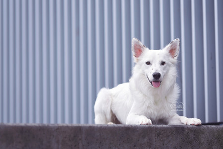 9. hondenfotograaf hondenfotoshoot honde