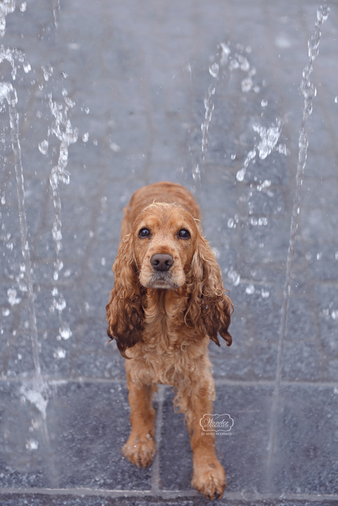 11 hondenfotograaf hondenfotoshoot honde