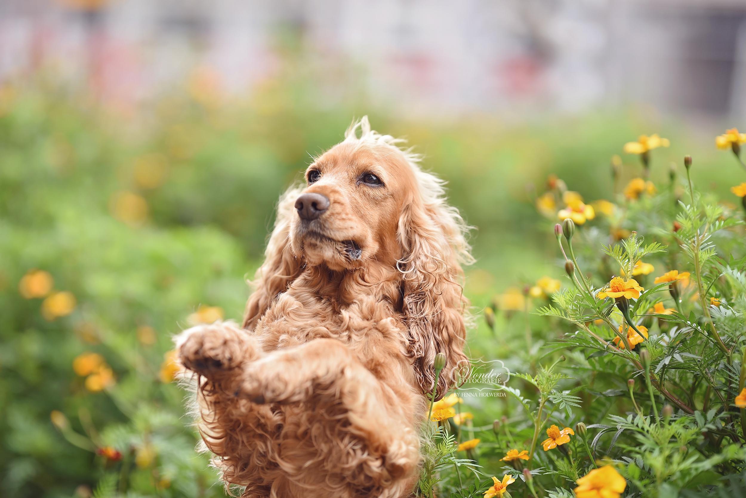 hondenfotograaf hondenfotoshoot hondenfotografie hond fotoshoot friesland overijssel flevoland