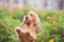 10 hondenfotograaf hondenfotoshoot honde