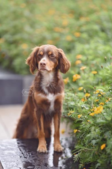 8 hondenfotograaf hondenfotoshoot honden