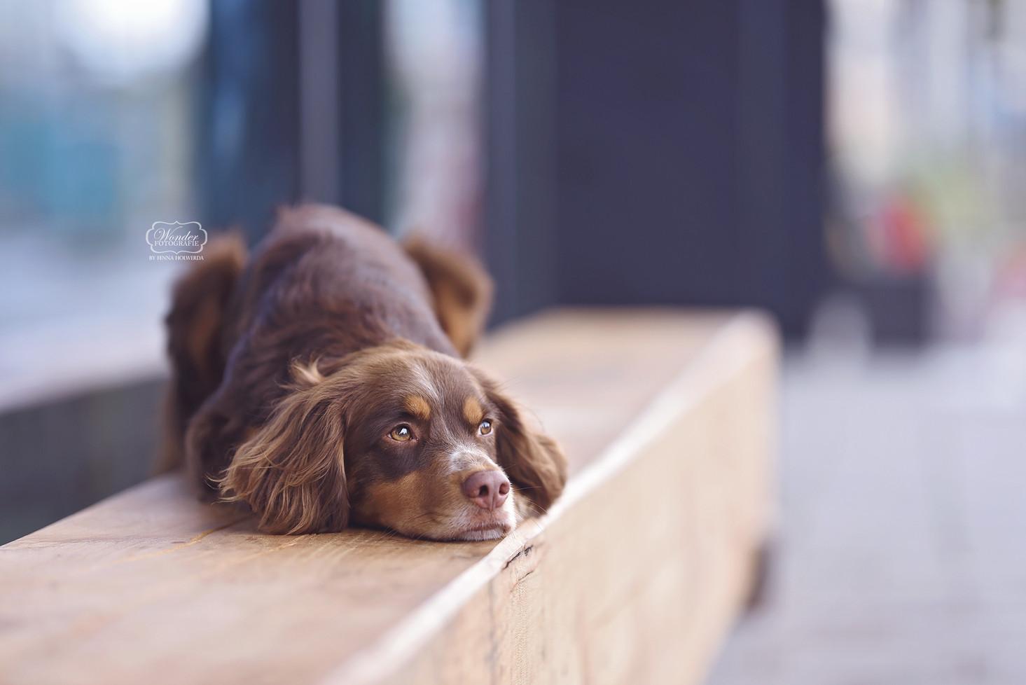 2 hondenfotograaf hondenfotoshoot honden