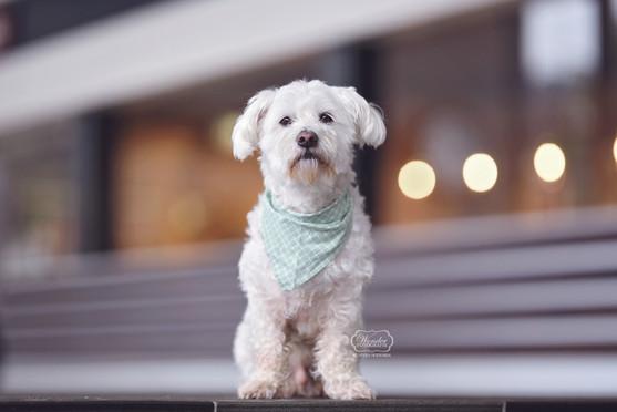 6 hondenfotograaf hondenfotoshoot honden