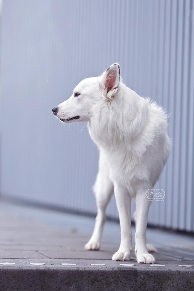 12 hondenfotograaf hondenfotoshoot honde