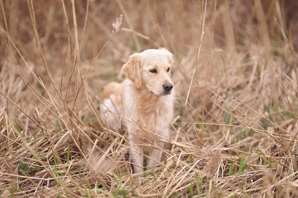 Hondenfotoshoot fotoshoot hond friesland
