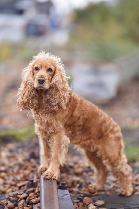 4 hondenfotograaf hondenfotoshoot honden