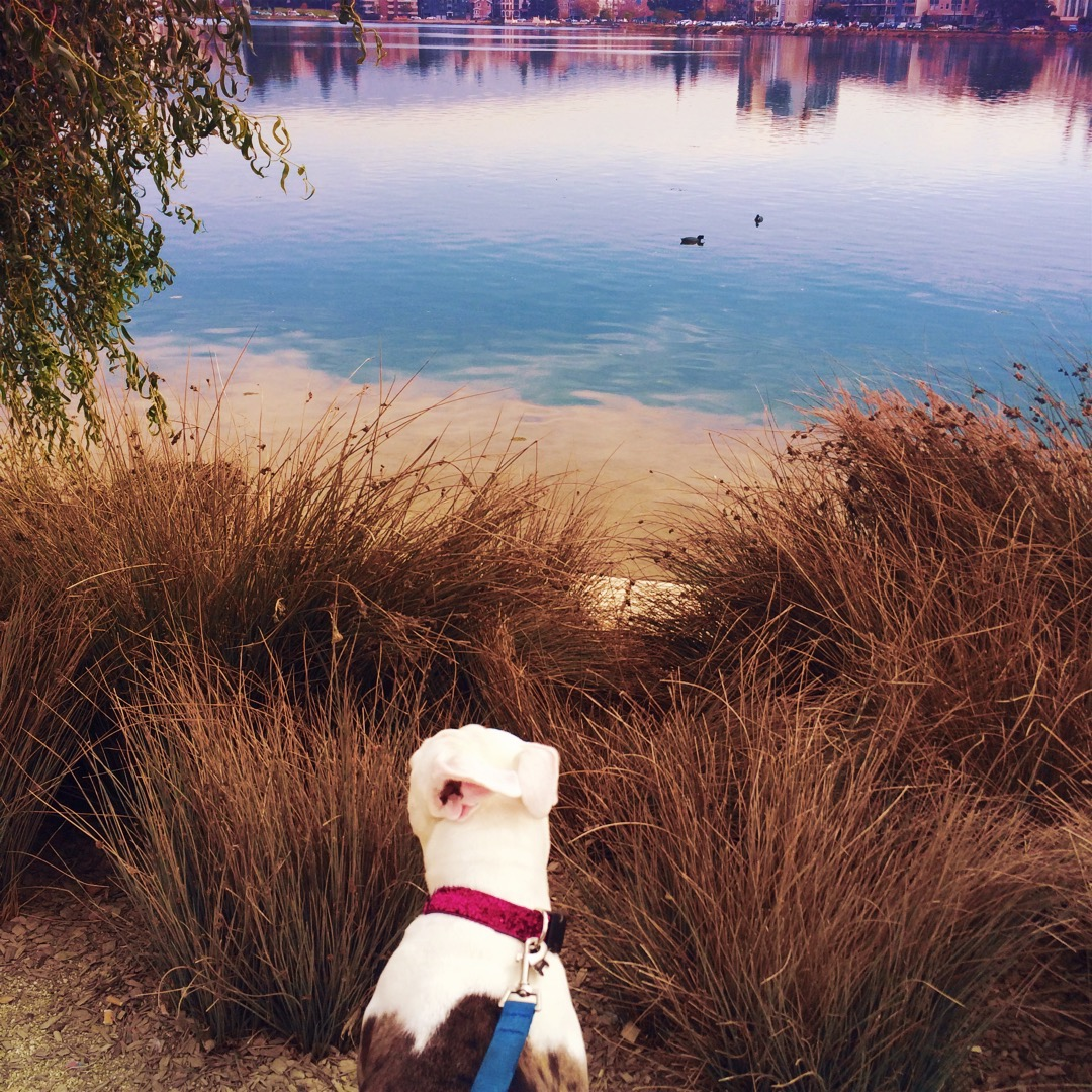 Lilah at Lake Merritt