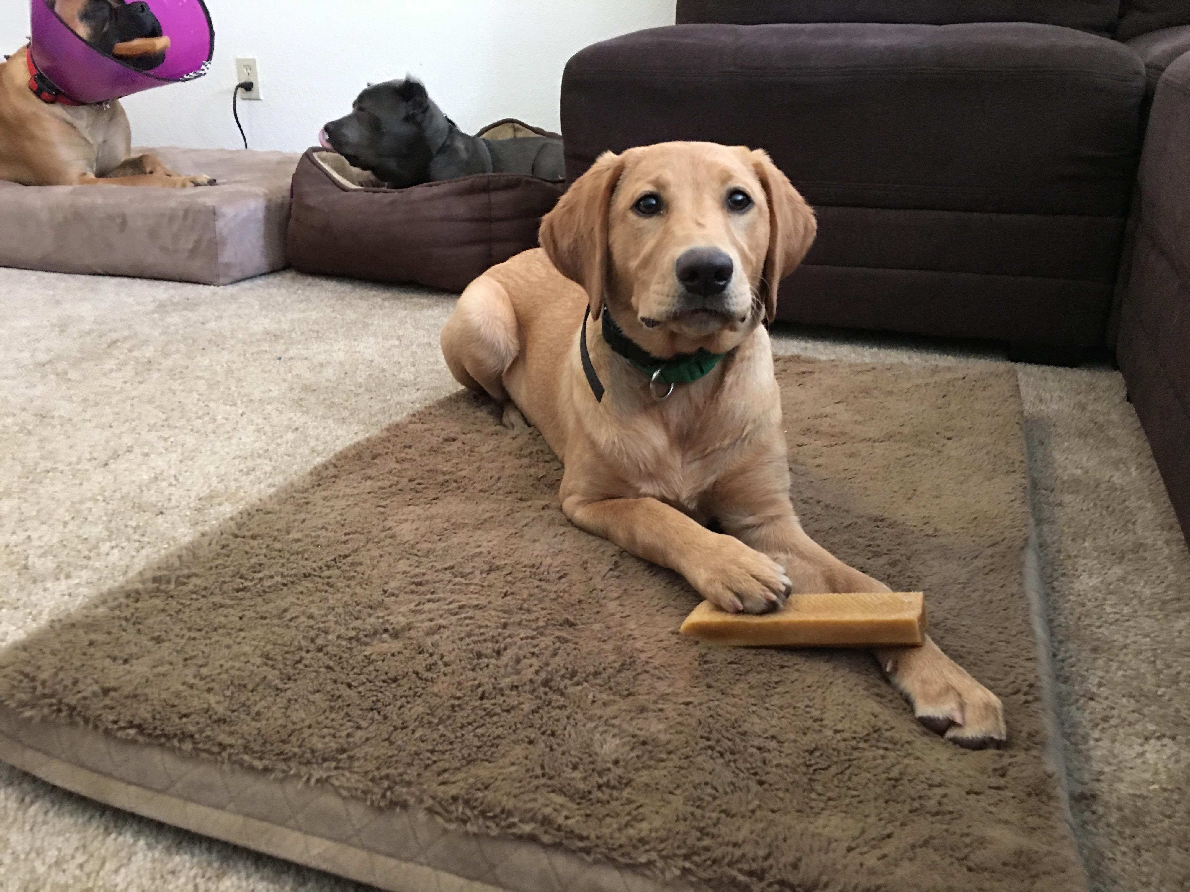 Dog Boarding